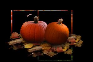 Real Pumpkin PNG Clipart PNG image