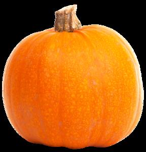 Real Pumpkin PNG File PNG Clip art