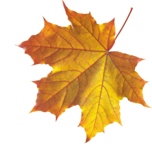 Realistic Autumn Fall Leaves PNG PNG image