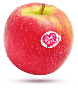 Red Apple PNG Free Download PNG Clip art