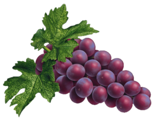 Red Grapes PNG PNG Clip art
