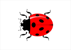 Red Ladybug PNG HD PNG Clip art