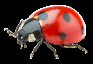 Red Ladybug PNG Transparent Picture PNG Clip art