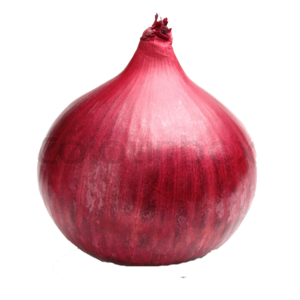 Red Onion PNG File PNG Clip art