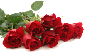 Red Rose PNG Free Download PNG Clip art