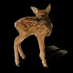 Reindeer PNG File PNG Clip art