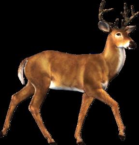 Reindeer PNG Free Download PNG Clip art