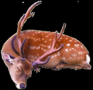 Reindeer PNG HD PNG Clip art