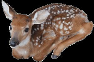 Reindeer PNG Image PNG Clip art