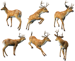 Reindeer PNG Photo PNG Clip art