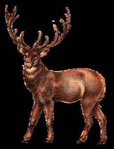 Reindeer PNG Photos PNG Clip art