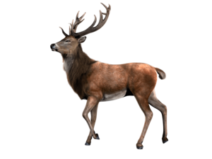 Reindeer PNG Pic PNG Clip art