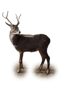 Reindeer PNG Picture PNG Clip art