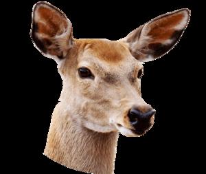 Reindeer PNG Transparent Image PNG Clip art