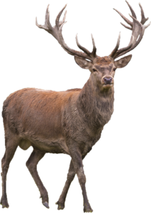 Reindeer PNG Transparent Picture PNG Clip art