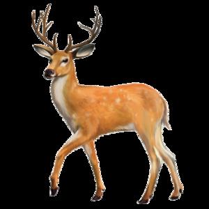 Reindeer Transparent Images PNG PNG Clip art