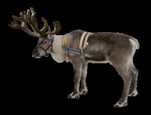 Reindeer Transparent PNG PNG Clip art