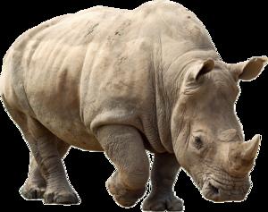 Rhino PNG Clipart PNG Clip art