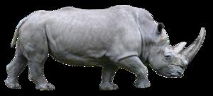 Rhino PNG File PNG Clip art