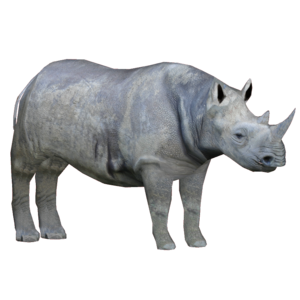 Rhino PNG Free Download PNG Clip art