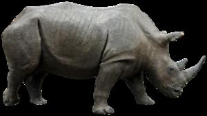 Rhino PNG HD PNG Clip art