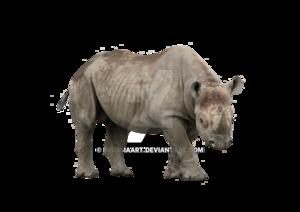 Rhino PNG Image PNG Clip art