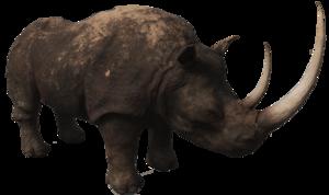 Rhino PNG Photos PNG Clip art