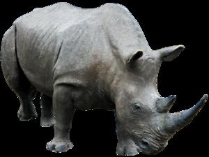 Rhino PNG Transparent Image PNG Clip art