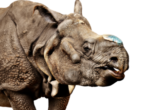 Rhino Transparent Background PNG Clip art