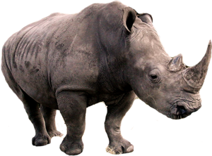 Rhino Transparent PNG PNG Clip art