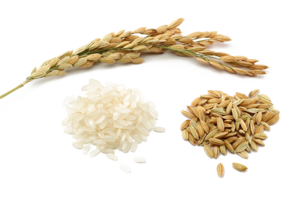 Rice PNG Pic PNG Clip art