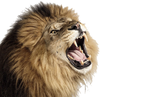 Roaring Lion PNG Photos PNG icon