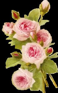 Romantic Pink Flower Border PNG Transparent PNG Clip art