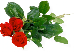Rose Bunch Transparent Background PNG Clip art