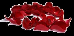 Rose Petals PNG Clipart PNG Clip art
