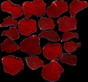 Rose Petals Transparent PNG PNG Clip art