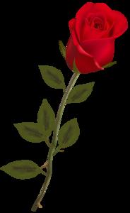 Rose PNG Image PNG Clip art