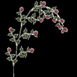 Rose Vine PNG File PNG Clip art