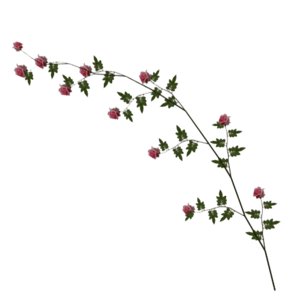 Rose Vine PNG Image PNG Clip art