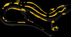 Salamander PNG Transparent Image PNG Clip art