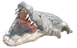 Saltwater Crocodile PNG Transparent Image PNG images