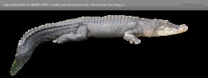 Saltwater Crocodile Transparent PNG PNG Clip art