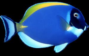 School of Fish PNG File PNG Clip art