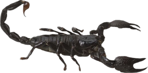 Scorpion PNG Free Download PNG Clip art