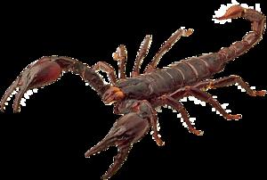 Scorpion PNG HD PNG Clip art