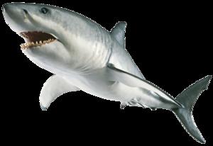 Shark PNG Image PNG Clip art