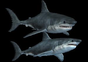Shark PNG Photos PNG Clip art