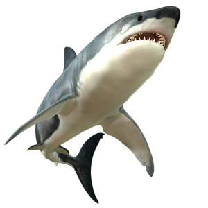 Shark PNG Picture PNG Clip art