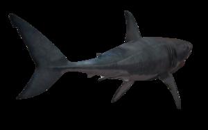 Shark PNG Transparent Image PNG Clip art