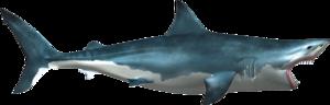 Shark PNG Transparent Picture PNG Clip art